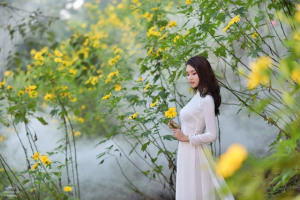 Thiếu nữ đất Cố đô khoe sắc bên hoa dã quỳ đầu mùa
